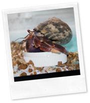 crab daddy 004